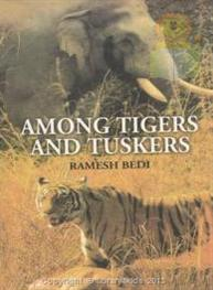 Among Tigers And Tuskers